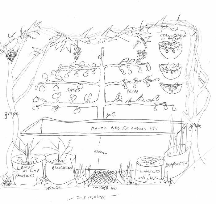 Permaculture drawing