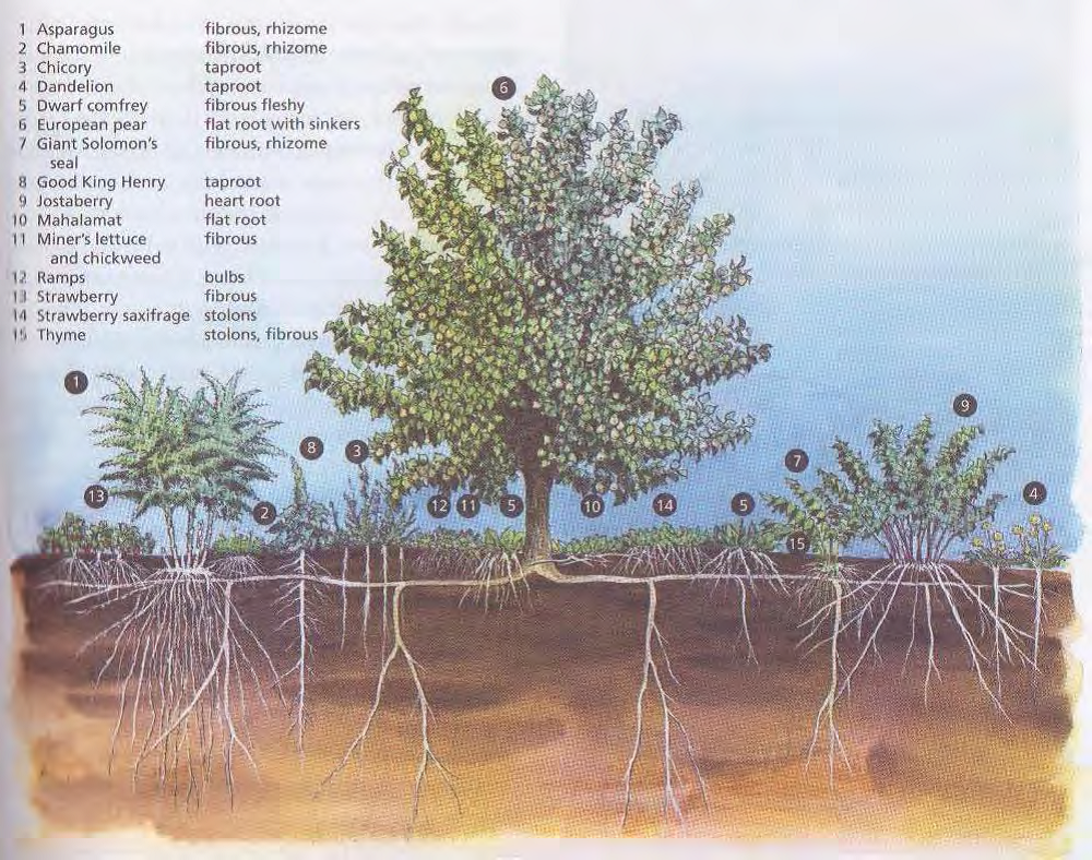 Food forest drawing